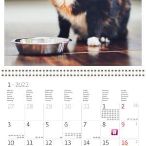 Muurkalender Cats 2022 Januari