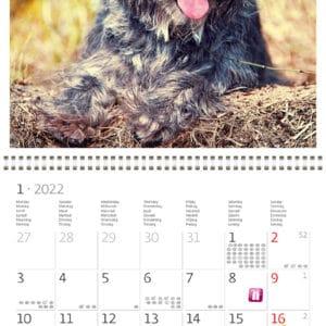 Muurkalender Dogs 2022 Januari