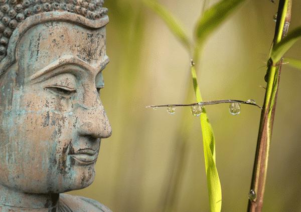 Muurkalender Meditation 2022 Februari